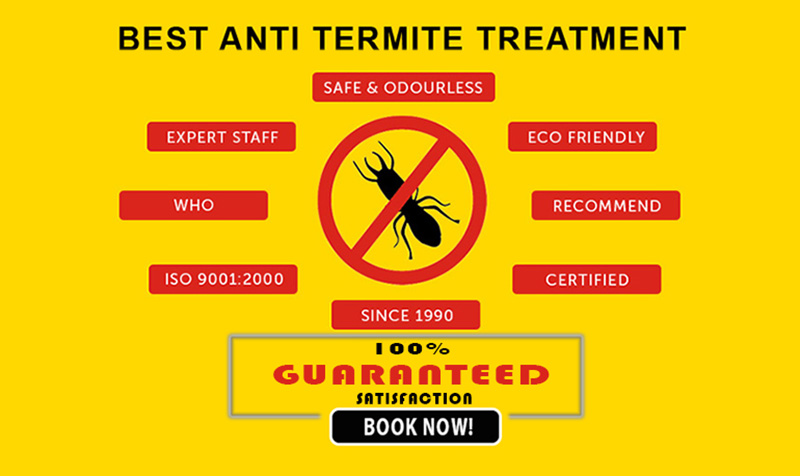 Termite Control - 100% Satisfaction Guaranteed