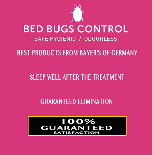 Bed Bugs Control - 100% Satisfaction Guaranteed